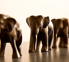 Elephant walk by Alex Howen