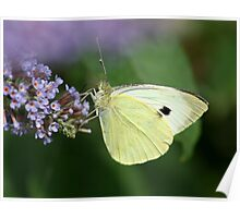 Cabbage White Poster
