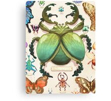 Beetle Collection Canvas Print