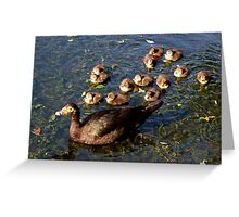 Muscovy mom and ducklings Greeting Card