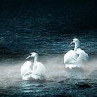 Swans in the Mist by Darlene Lankford Honeycutt
