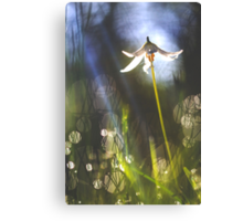 Prelude To A Fairy Tale Canvas Print