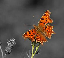 Colourful Butterfly by Robert Abraham