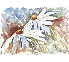 Daisy love in Spring Photographic Print