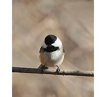 Cheeky Chickadee Photographic Print