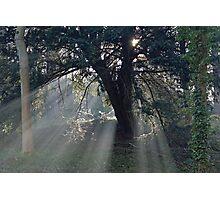 Sunlit glade Photographic Print