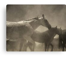 Dusty & Cute. Canvas Print