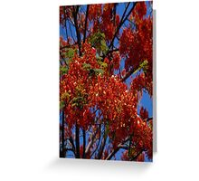 Red Canopy Greeting Card