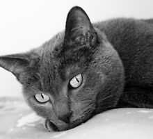 Russian Blue Cats Eyes - B&W by lepprdqueen