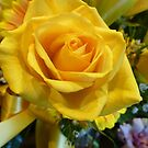 YELLOW ROSE by Elaine Bawden
