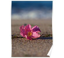 Rose Hip Blossom at the Beach Poster