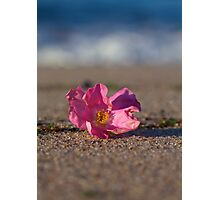Rose Hip Blossom at the Beach Photographic Print