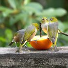 Mmmm........I don't think these oranges are as good as last years......! by Roy  Massicks