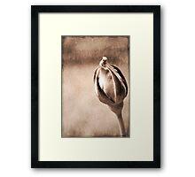 Stone Rose Framed Print