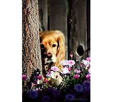Stevey and the Tree Photographic Print