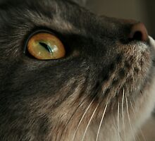Look Up Cat by terrebo