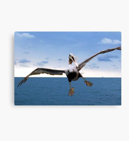 Crazy Pelican Canvas Print