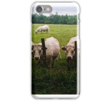 Cows in the countryside iPhone Case/Skin