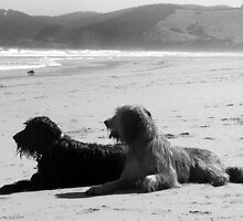 Briard Beach Bums by tanjem