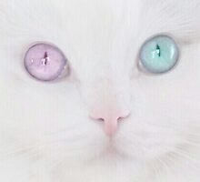 Pale Eye Catching Cat by palegrungecat