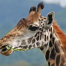Delicious! Arusha National Park, Tanzania  by Adrian Paul