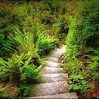 Garden Steps by naturelover