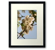 Blossoms I Framed Print