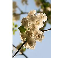 Blossoms I Photographic Print