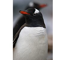 Penguin pair as snow falls Photographic Print