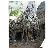 Strangler Fig Tree at Temple Ta Prohm, Cambodia Poster