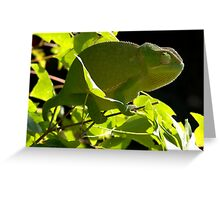 Chameleon on the maple tree  Greeting Card