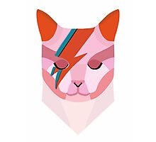 David Bowie Cat Photographic Print