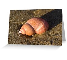 Pink Shell on the Beach Greeting Card