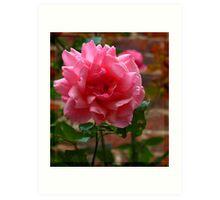 Gleaming Rose Art Print