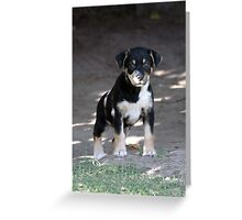 Little Millie Greeting Card