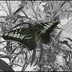 butterfly drawing by Heike Nagel