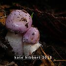 NewBorn by Kate Hibbert