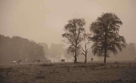 foggy landscape by Heike Nagel