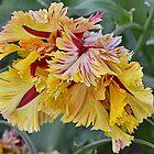 Parrot Tulip by lynn carter