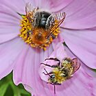 Two Bee or not Two Bee by AnnDixon