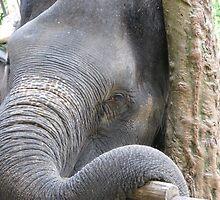 Elephant Magic by mickrams