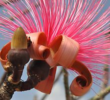 Shaving Brush Flower by kramer03