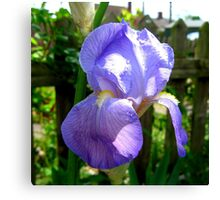 THE BEAUTY OF THE IRIS Canvas Print
