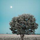 Moon tree by Alexander Meysztowicz-Howen