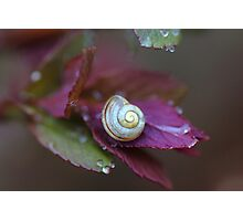 Little Snail On A leaf Photographic Print