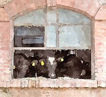 Cows in stable by Giuseppe Cocco