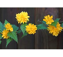 Yellow Blooms Photographic Print