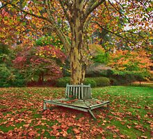 Celebrating Autumn_Mt Wilson by Sharon Kavanagh