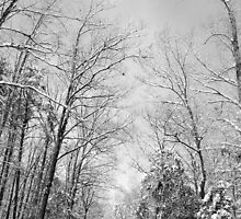 A long winter road by gkvauthier32