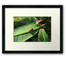 Yellow Ladybug Framed Print